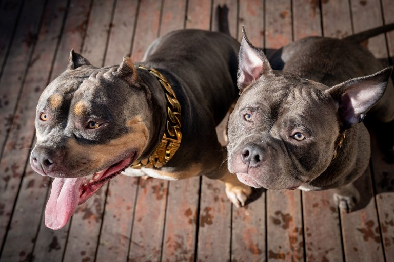 Capone and Chloe